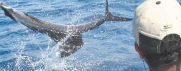 Código Verde: Pesca deportiva: rentable, legal y verde