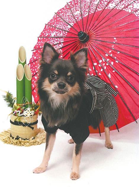 Dispositivo controla salud de los perros