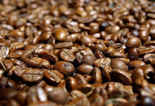 Exportaciones de café hondureño caerán por la roya