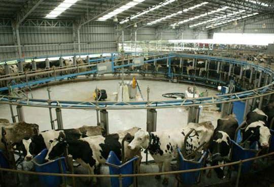 Nicaragua anuncia que proyecta operar planta láctea