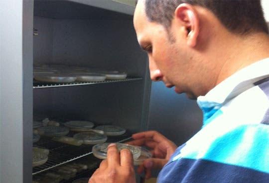 INA desarrolla hongo contra La Roya