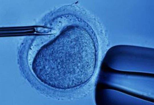 201302121615561.Fecundacion-in-vitro.jpg