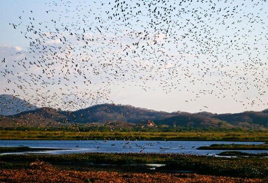 Aves regresan a Palo Verde