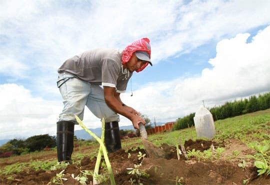"""Premiarán a agricultores y ganaderos """"verdes"""""""