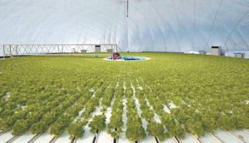 Agricultura sin suelo tras Fukushima