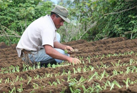 Agricultores mejoran producción con tecnología