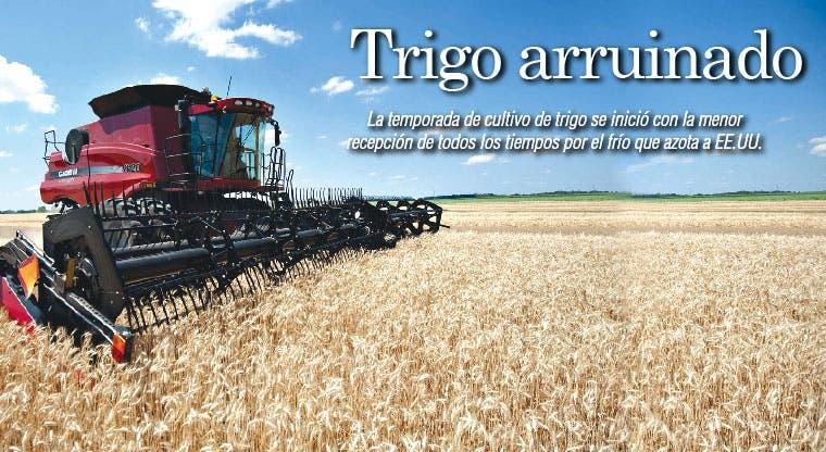Heladas arruinan cosecha de trigo