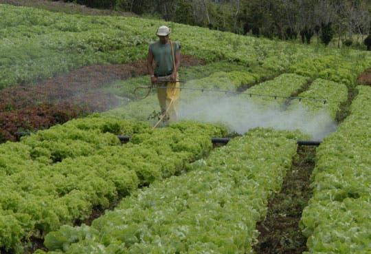 201305060934231.pesticida-biodegradable.jpg