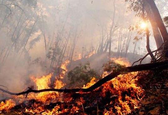 Incendios forestales siguen afectando