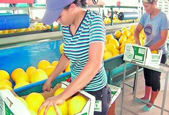 Autoridades buscan aprobar protocolos de exportación