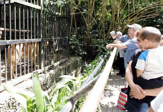 Visite el zoológico en la noche