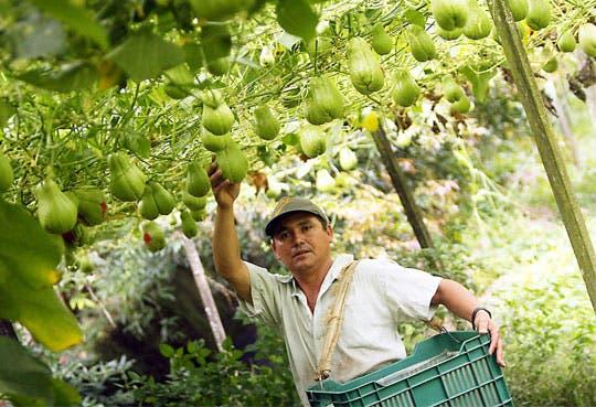 201305201533341.agricultura-creditoos.jpg