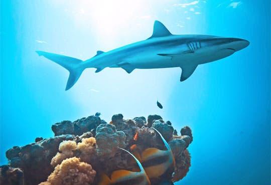 Piden veda de pesca de tiburón