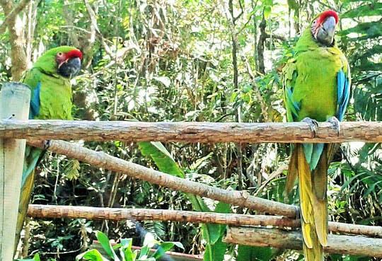 Nuevo recinto de aves en zoológico