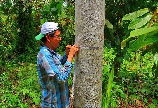 201306041040201.desafios-bosques.jpg