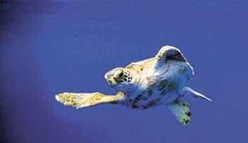 Concurso premiará a guardianes de los océanos