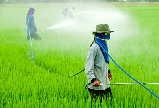 Agroquímicos dañan suelos y salud