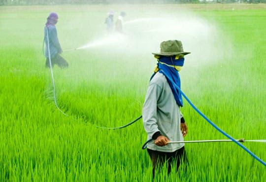 201307011031491.pesticidas.jpg