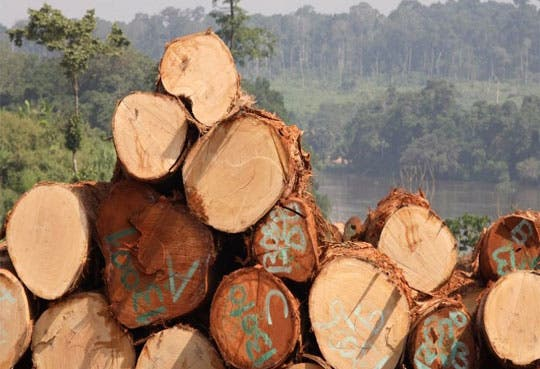 Panamá albergará encuentro sobre gobernanza forestal