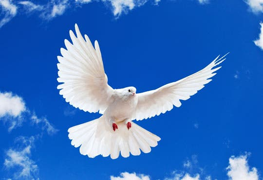 Aeronaves de Obama violaron derecho a la paz