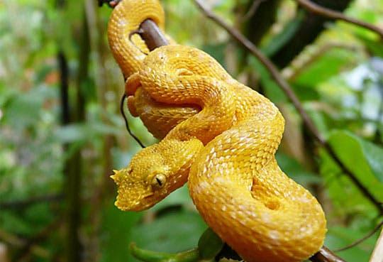 Rescatan cinco serpientes de contrabando hacia Venezuela