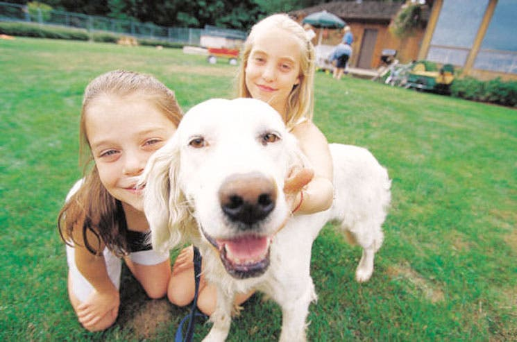 Perros imitan las acciones de los humanos