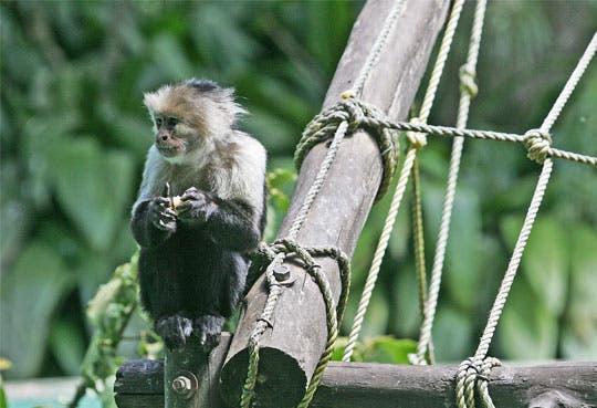 Zoológicos eliminarán jaulas de animales