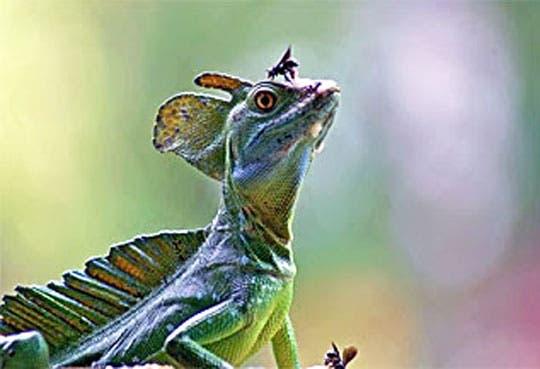 País cuenta con nuevas especies biológicas