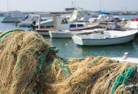 Prohíben pesca de arrastre en el país