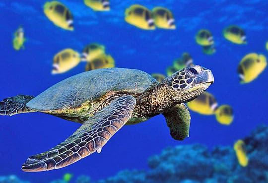 Un año de prisión a hombre que mató tortuga