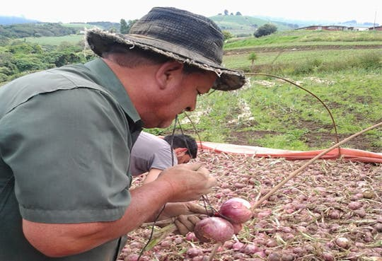 201309231213181.cebolla-productores.jpg