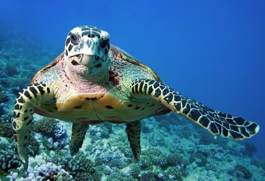 Muerte masiva de tortugas en el Pacífico Norte
