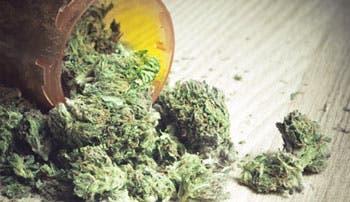 Uruguay se acerca a la legalización de la marihuana