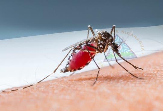 201311201652331.dengue.JPG