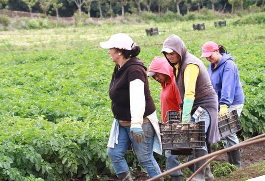 Familias latinas apuestan por agricultura