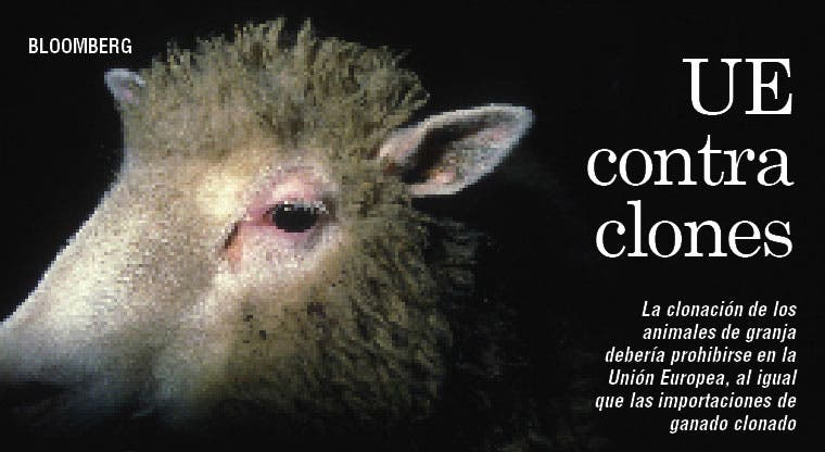 UE prohibiría clonar animales y vender carne de clon