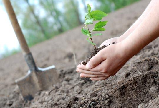 Arranca plazo para pedir pagos por Servicios Ambientales