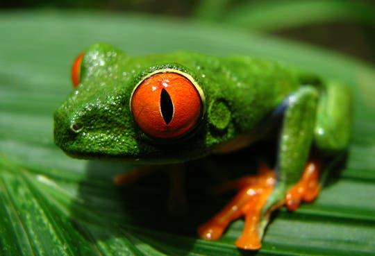 Día Mundial de Vida Silvestre