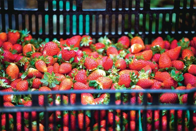 Chinos pagan más por productos orgánicos