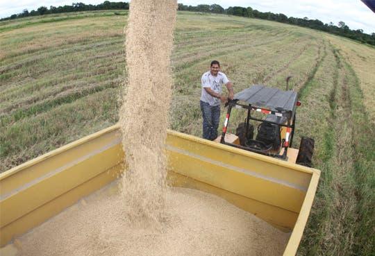 Planta de semillas beneficiará producción arrocera