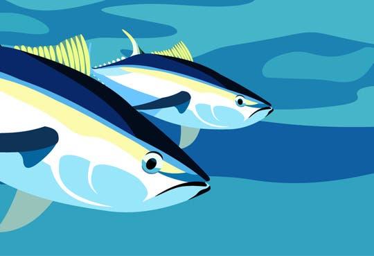 Piden pronta regulación para pesca de atún
