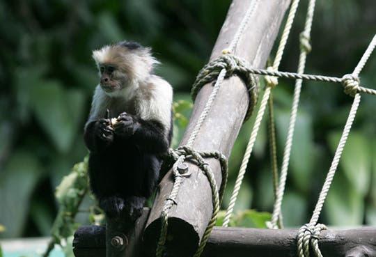 Solicitarán devolución de zoológicos en manos privadas