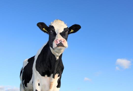 Refuerzan lucha contra robo de ganado