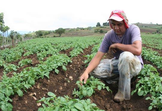Condiciones climáticas alertan al sector agropecuario