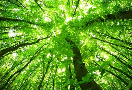 Costa Rica es referente mundial en protección forestal