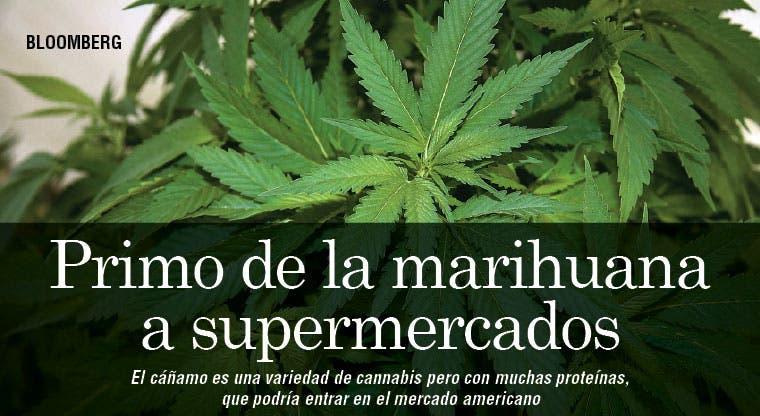 Planta similar a la marihuana ingresará a los supermercados