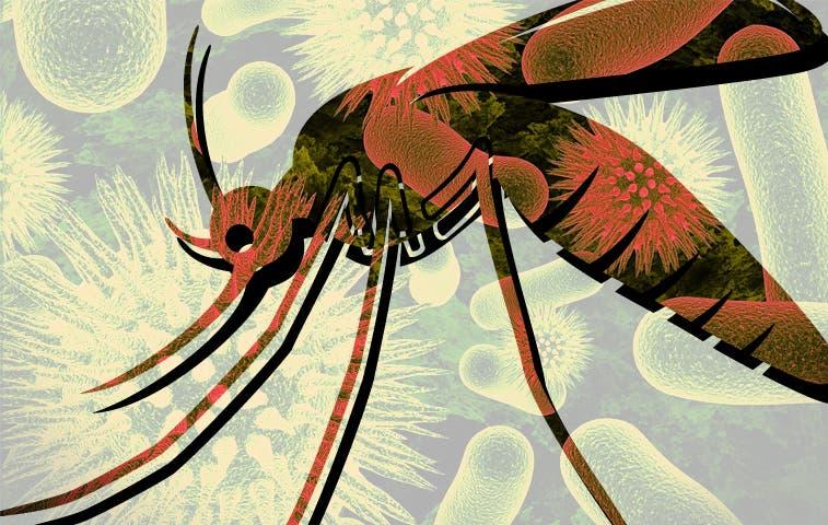 En alerta ante posible brote de Chikungunya