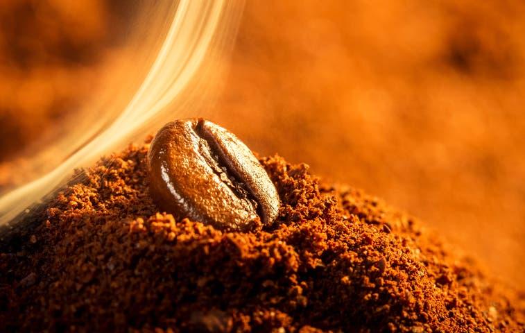 Optimismo por auge en cosecha de café
