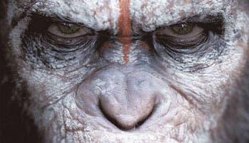 Vuelven los simios, más humanos y más reales