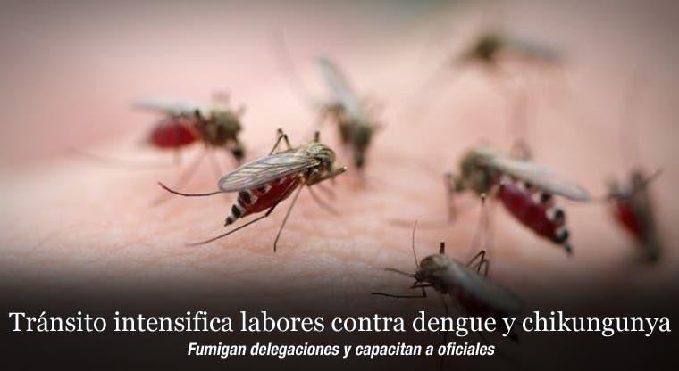 Tránsito intensifica labores contra dengue y chikungunya